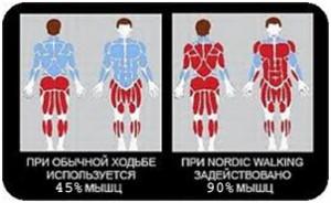 Скандинаская-ходьба-мышцы