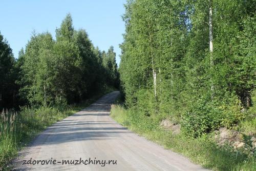 Лесная грунтовая дорога